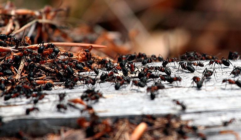 myrer-forside