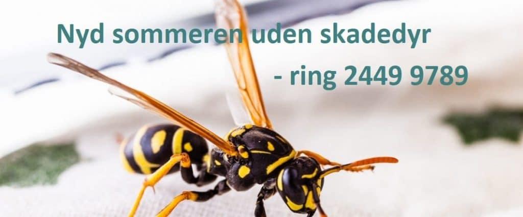 Nyd Sommeren Uden Hvepse 1024x425 1