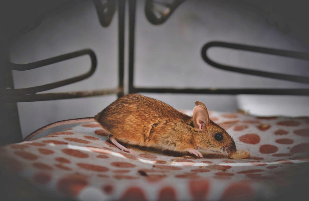 mus-i-huset-