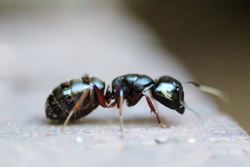 problemer-med-myre